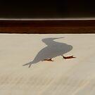 shadow gull by Georgie Hart