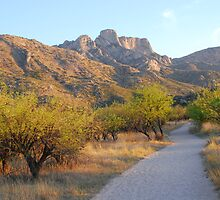 Catalina State Park #2 by Barbara Manis