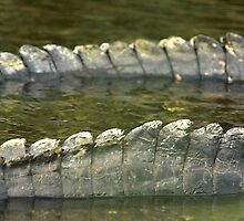 Alligator tails by Larry  Grayam