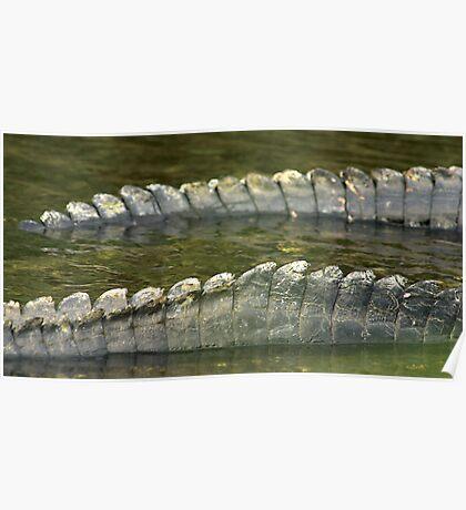 Alligator tails Poster