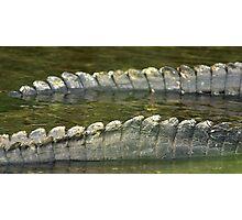 Alligator tails Photographic Print