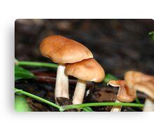Fungi season 1 Canvas Print