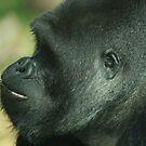 West Lowland Silverback Gorilla 2 by Franco De Luca Calce