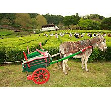 Donkey and cart Photographic Print