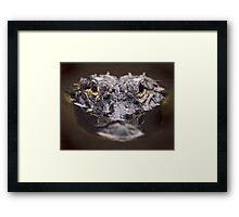 Loxahatchee Gator Framed Print