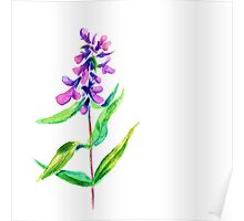 Lilac flower. Watercolor floral illustration. Poster