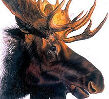 Bullwinkle by BarbBarcikKeith