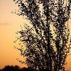 Light of Dawn by metriognome