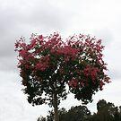 Pink Tree by Kristin Nichole Hamm