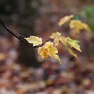 Autumn Mount Wilson 2 by Geoff Smith