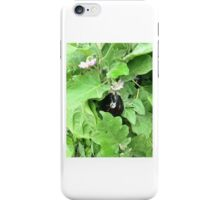 egg plant 1 iPhone Case/Skin