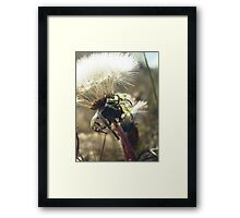 Soft & Dandy Framed Print