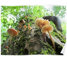 Fungi on a Willow Tree Poster