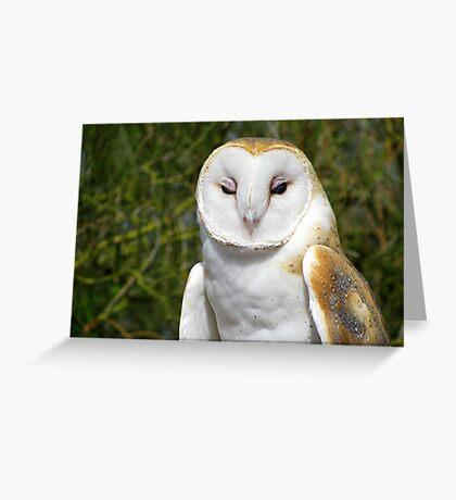 Barn Owl ~ Hey baby....... Greeting Card