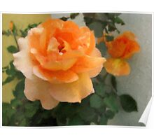 Peach Rose 1 Oil Poster