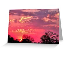 NATURE'S PAINTBOX Greeting Card