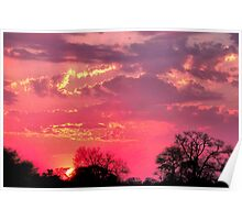 NATURE'S PAINTBOX Poster