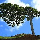One Tree Hill by Kathy Reid