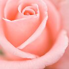 The rose by Lauren Drage {Photography}