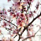 Springtime Beauty by AbigailJoy