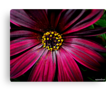 Magenta Moment!  Canvas Print