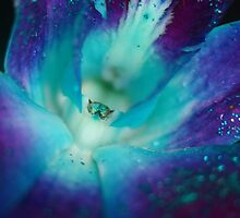 BLUE SINGAPORE ORCHID by annie curry