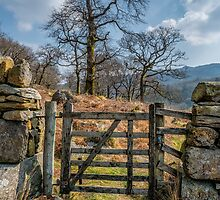 Country Gate by Adrian Evans