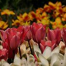 Totally Tulips by Martina Fagan