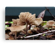 Fungi season 2 Canvas Print