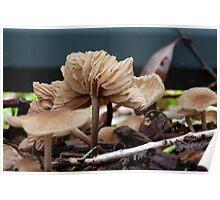 Fungi season 2 Poster