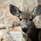 Mule Deer, Bandelier National Monument: The Life of the Party by TheBlindHog