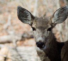 Mule Deer, Bandelier National Monument: The Life of the Party by Mitchell Tillison