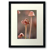 Fungi season 4 Framed Print