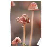 Fungi season 4 Poster