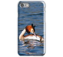 Great Crested Grebe iPhone Case/Skin