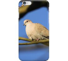 Collared Dove iPhone Case/Skin