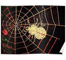 Floral spider on web Poster