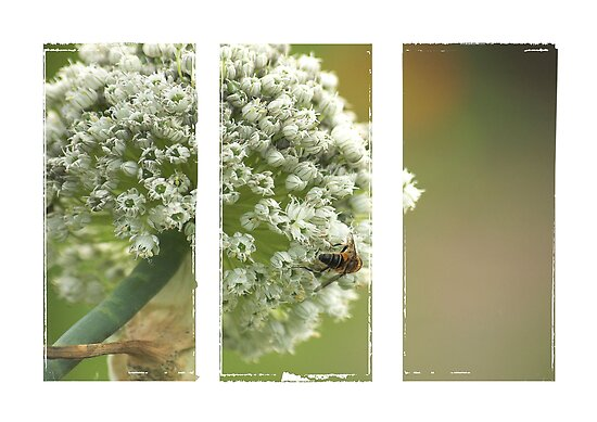 *florets* by funkymarmalade