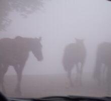 Dream with horses by sabosha