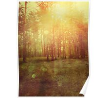 Sunset Forest 2 Poster
