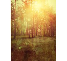 Sunset Forest 2 Photographic Print