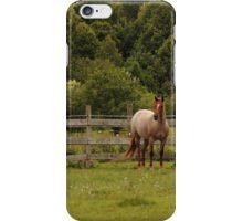 Quarter Horse iPhone Case/Skin
