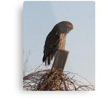 Owl Watch! Metal Print