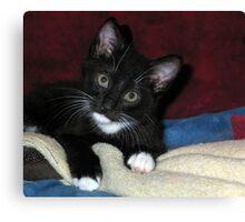 Quizzical Kitten Canvas Print