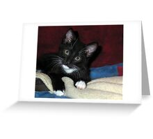 Quizzical Kitten Greeting Card