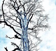 Veins of Bark by kclong