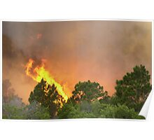 Indrio Savannahs woods fire Poster