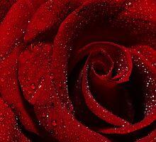 Diamond Studded Roses by chrispua