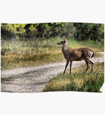 Deer Xing Poster