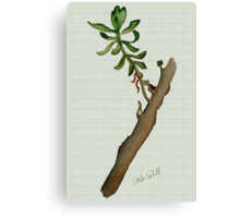 Twig Study Canvas Print